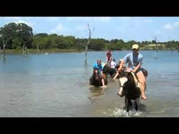 black mustang ranch 2010 black mustang ranch wilderness summer c swimming with