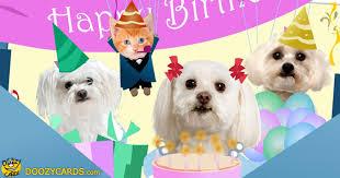 singing birthday birthday greetings with dogs singing birthday e cards