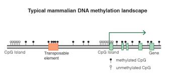 dna methylation wikipedia