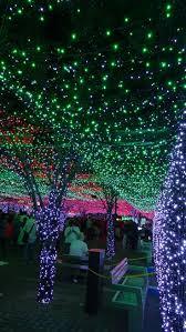 Oglebay Christmas Lights by 392 Best Images About Christmas Lights On Pinterest