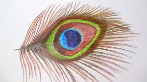 peacock feather drawing with pencil how to draw a peacock