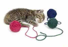 cat toys howstuffworks