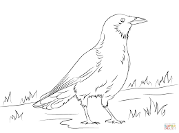 american crow coloring page free printable coloring pages