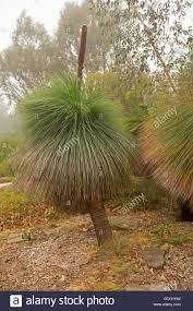 native plants south east queensland australian native plant stock photos u0026 australian native plant