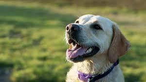 november 16 2017 page 4 dogs smile animals animal