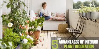 home interior plants top 5 advantages of interior plant decoration guangzhouacp benefits