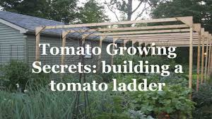 tomato growing secrets building a tomato ladder youtube