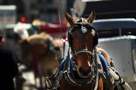 group protests horse drawn carriages outside gracie mansion cbs