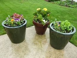 free photo patio potted pots containers plant flowers garden max