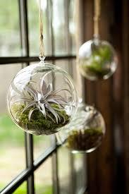3pcs set blown glass hanging terrarium kits airplant orb