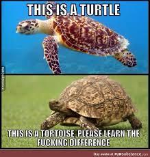 Tortoise Meme - turtle vs tortoise funsubstance