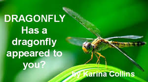 meaning of dragonfly spiritual symbolism of dragonflies