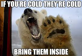 Hairless Bear Meme - if you re cold they re cold bring them inside message board