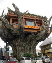 creative tree house design tree house designs treehouse