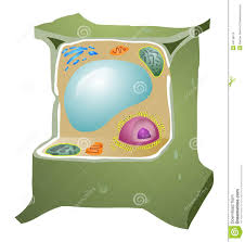 top 92 plant cell clip art free clipart image