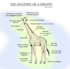 Giraffe Floor L The Anatomy Of The Giraffe Proper Anatomy Your Meme
