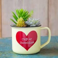 mug vs cup owl mugs coffee mugs on the go cups natural life