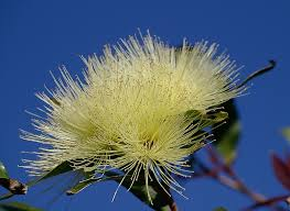 free photo blossom flowers white fluffy free image on