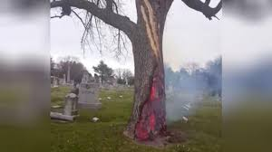 tree burns from the inside after lightning strike the weather