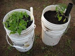 homemade self watering containers diy sip containers
