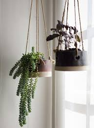 fanciful hanging along with hanging plant in indoor hanging plants