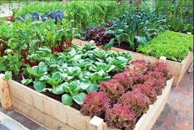 tips about vegetable gardening for beginners u2013 gardening design idea