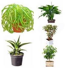 indoor plant house plant types categories of indoor plants