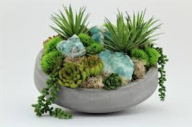 succulents u0026 cactus plants you u0027ll love wayfair
