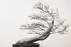 visualizing the meditative lives of bonsai trees u2013 proof