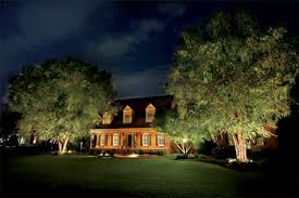 Tree Lights Landscape Showcase Outdoors