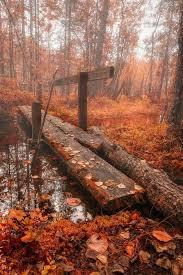 a fall autumn thanksgiving autumn ambience
