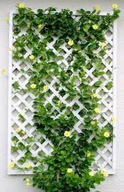 Trellis For Climbers White Lattice Feature Trellis With A Colourful Flowering Vine