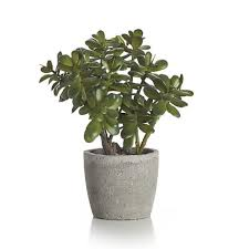 Common Tropical House Plants - 34 poisonous houseplants for dogs plants toxic to dogs balcony