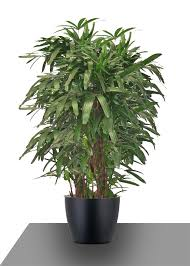plants that clean the air in your home no voc plants