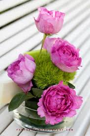 Fragrant Rose Plants Rose Yves Piaget
