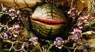 Feed Me Seymour Meme - little shop of horrors gifs get the best gif on giphy