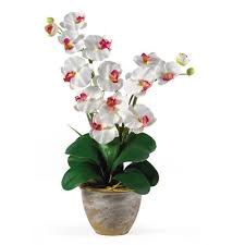 silk orchids nearly phalaenopsis silk orchid flower in white