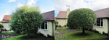 tree pruning trimming services hamilton waikato groundzone