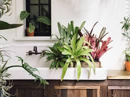 5 shade loving plants you haven u0027t seen everywhere plants