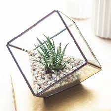 glass cube succulent terrarium kit house your succulents and