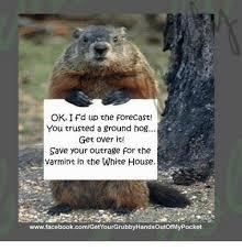 Groundhog Meme - 20170718 033850 ground hog crossing ground hog meme on me me