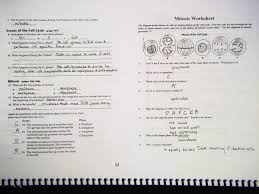 Mitosis Worksheet Phases Of The Cell Cycle Test 4 Cell Cycle Mrs Johnson U0027s Site