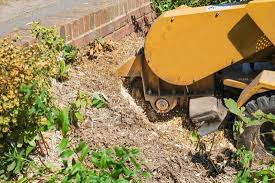 the most poisonous plants in australia hipages com au how much does tree stump removal cost hipages com au