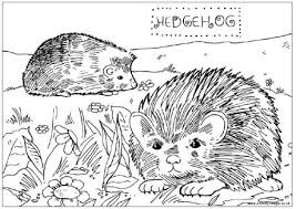 sonic hedgehog coloring pages hedgehog coloring page getcoloringpages com