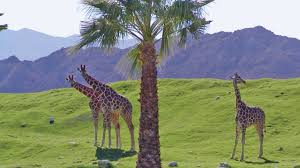 Buffet In Palm Springs by 10 Activities To Do On Father U0027s Day In The Palm Springs Area