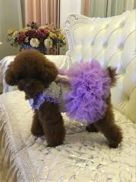Dog Wedding Dress Handmade Dog Dress For Summer Dog Clothes Skirt Princess Tutu