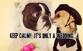 wedding wishes humor marriage advice