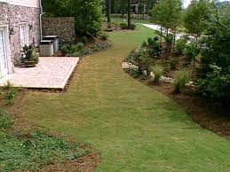 Backyard Trees Landscaping Ideas by Planting For Privacy Diy