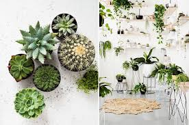 Succulent Styling  Caribbean Living Blog - Interior design styling