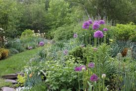your favorite alliums and pin it to win it longfield gardens